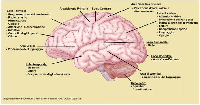 Cambiamenti neurocognitivi che occorrono con l'età